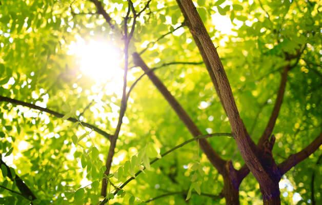 森林と木漏れ日の写真